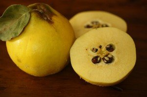 quince-with-pips2