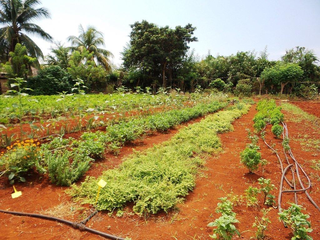 Organic co-op farm
