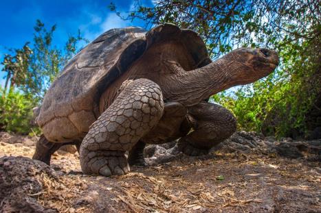 https://www.caravan-serai.com/wp-content/uploads/2020/01/Galapagos-1.jpg